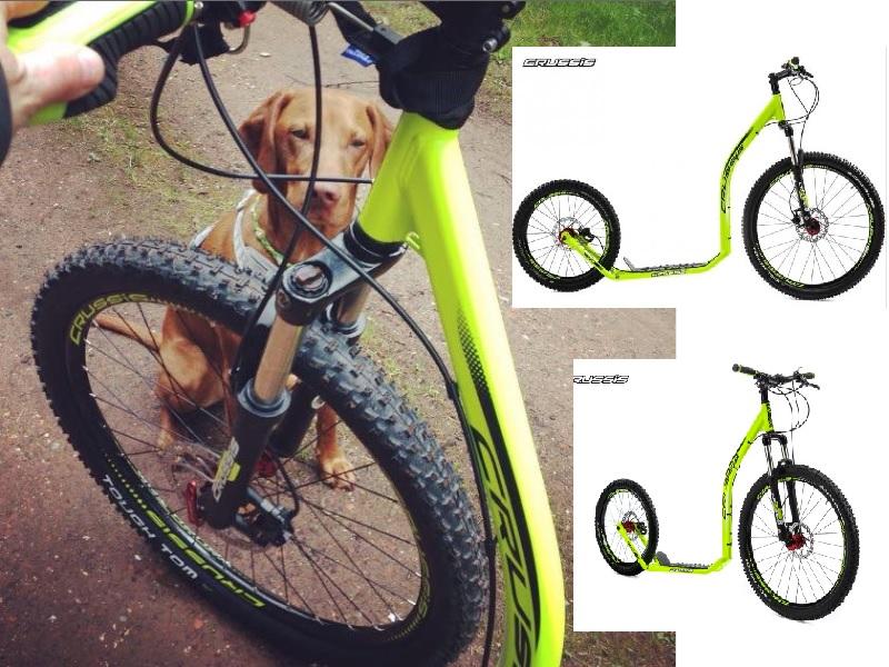 Crussie_Dog_Hundezugsport