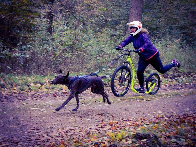Crussie_Dog_Hundezugsport_Roller_2
