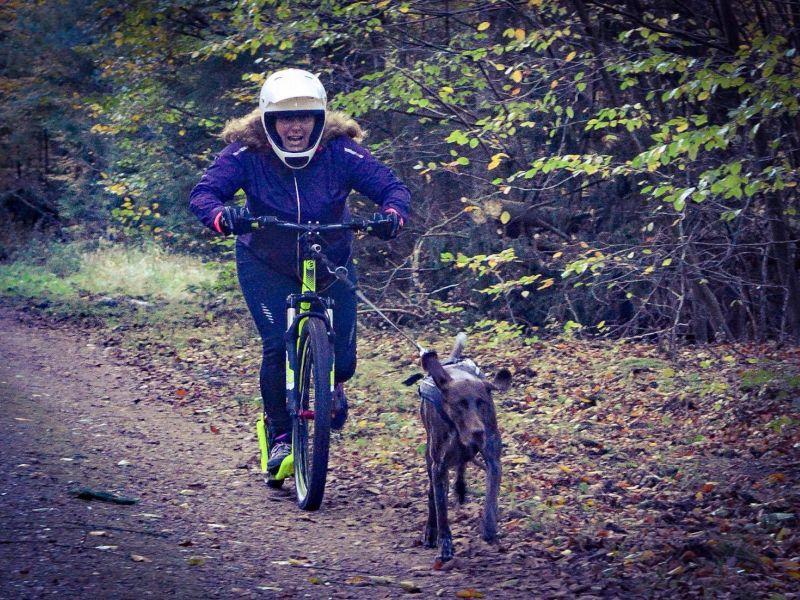 Crussie_Dog_Hundezugsport_Roller_4