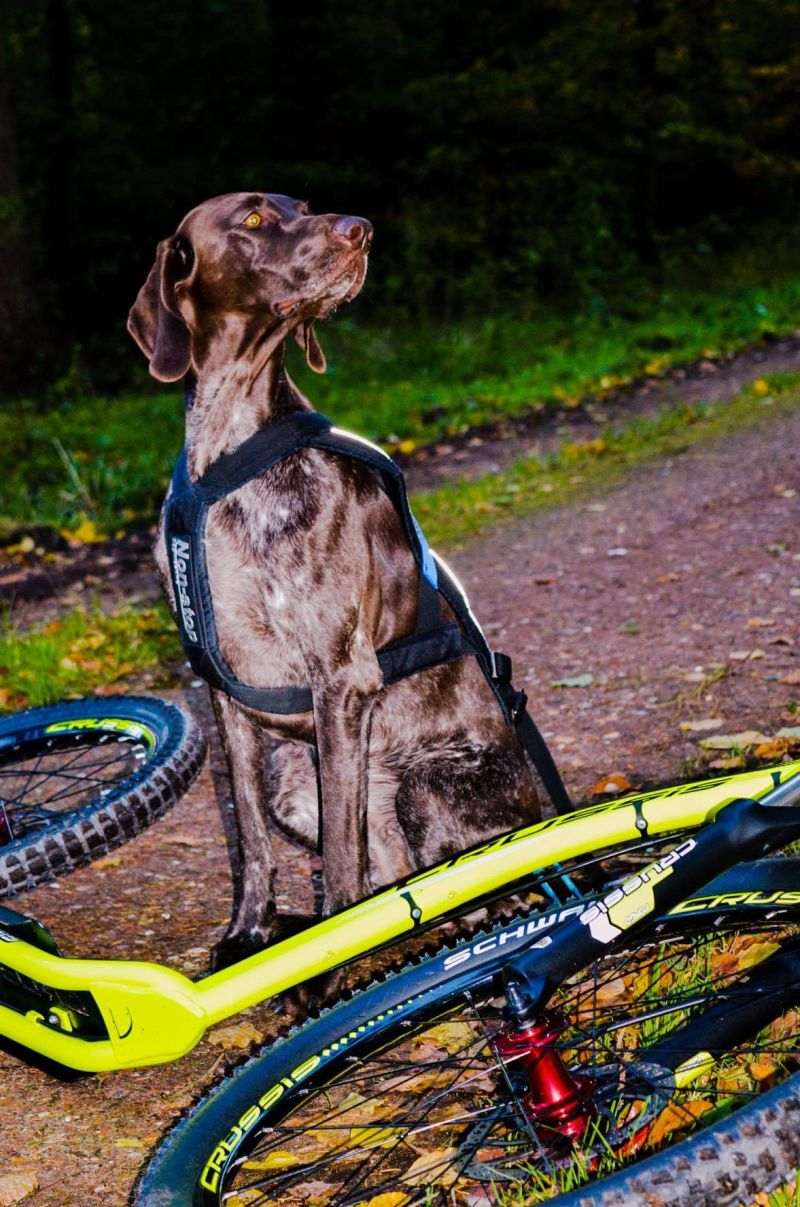 Crussie_Dog_Hundezugsport_Roller_5