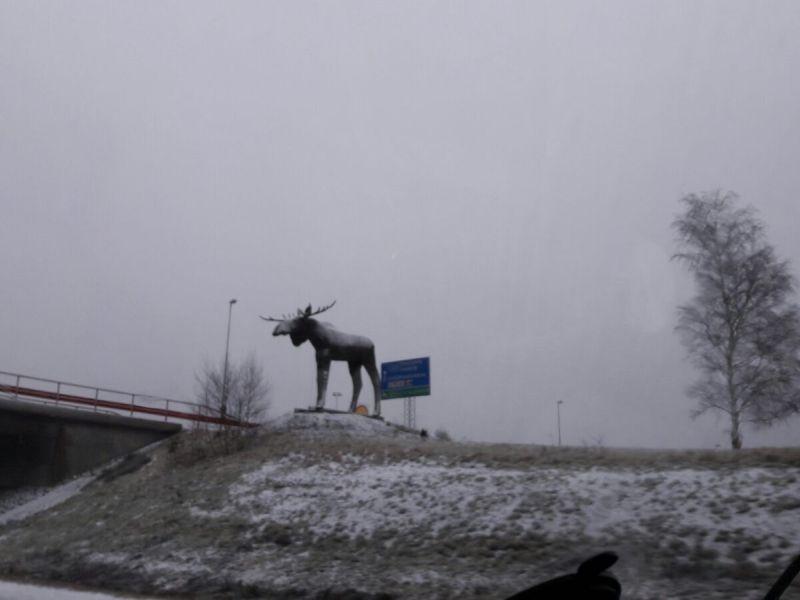 IceRallye2017_kopenhagen_ersterElch