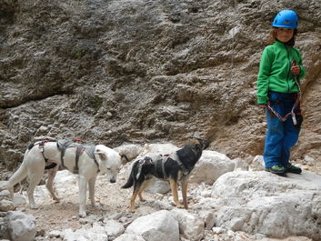 Richtig Klettern mit Hunden